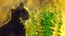 What Happens When Cats Have Catnip?   Pets: Wild At Heart   BBC Earth