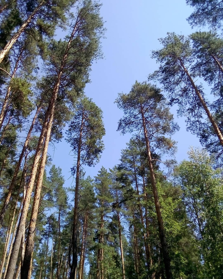 Сегодня - международный День работников леса и лесоперерабатывающей промышленности