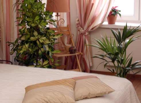 Комнатные растения, которые подходят для спальни.