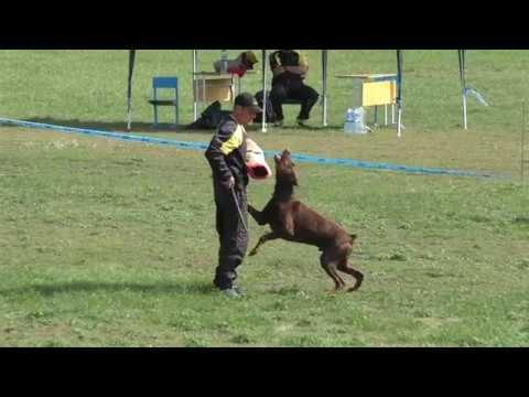 Чемпионат России 2017 г по ОКД и ЗКС Двоеборье