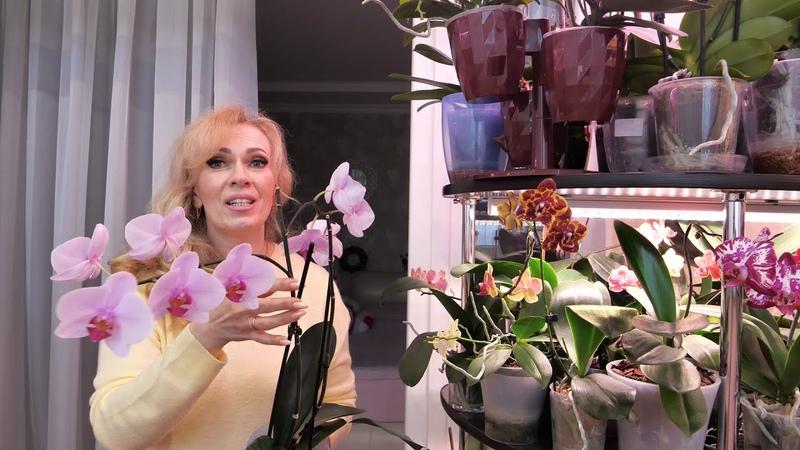 НЕ НАВРЕДИТЬ орхидее НЕЛЬЗЯ удобрять А что тогда МОЖНО Отдам орхидею в ДОБРЫЕ РУКИ