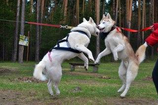 собаки и кошки Всех Пород!!!!*)*)*) г.Уфа | ВКонтакте