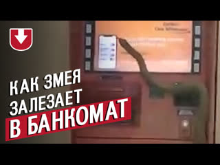 Как змея залезает в банкомат