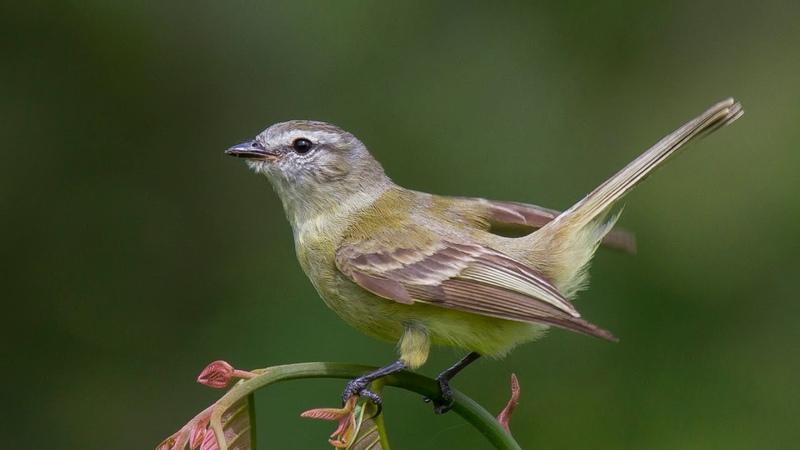 Детям о перелетных птицах