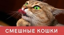 Про Кошек. Смешые Кошки. Приколы с Котами