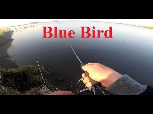 Обкатал ПАЛОЧКУ FAVORITE BLUE BIRD на окунях! Микроджиг и отводной поводок что эффективнее