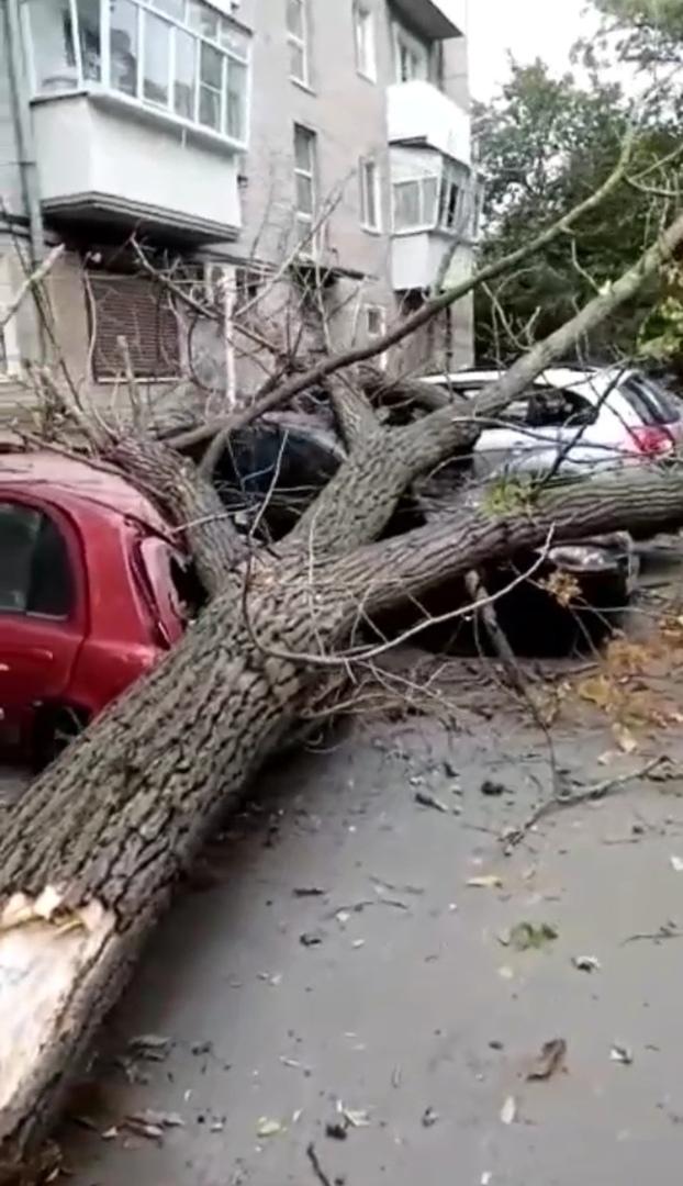 🎥 В Азове на Привокзальной 27 упало дерево , есть пострадавшие