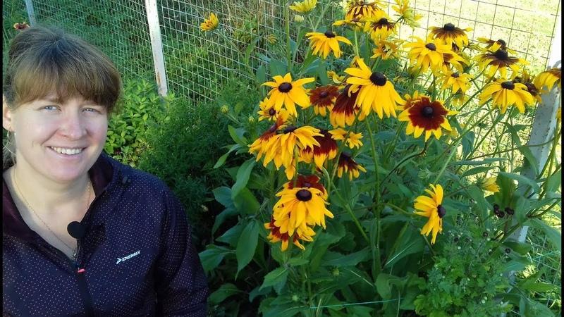 Рудбекия выращивание из семян цветение в первый год