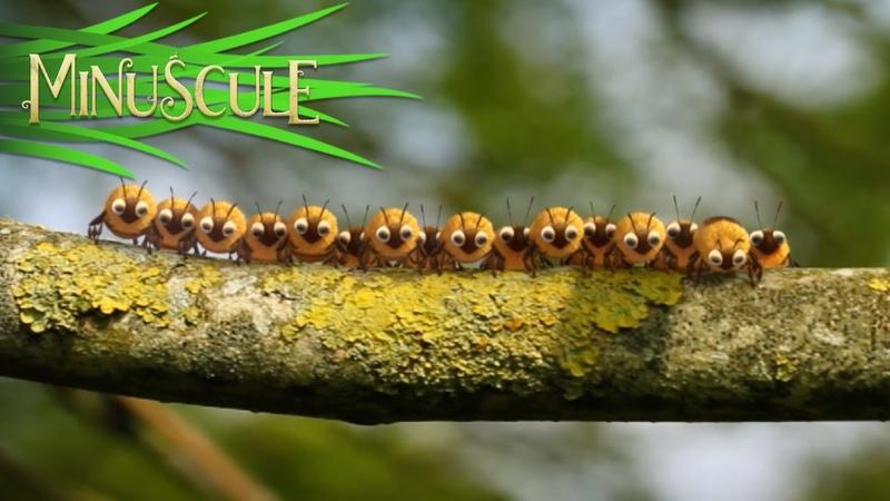 Minuscule - Honey fly Mouche à miel (Season 2)