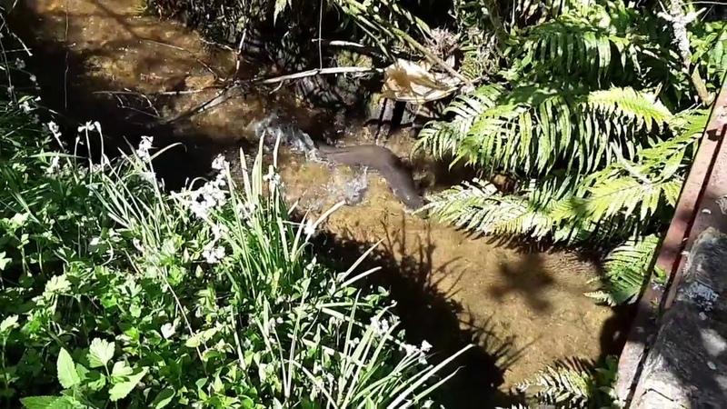 Биотоп безымянного ручья Тихий океан Океания Полинезия остров Северный бассейн реки Патеа Новая Зеландия регион Таранаки