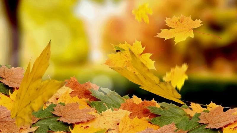 Абдуллах Борлаков листья желтые
