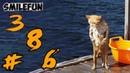 КОШКИ Приколы с Котами и Кошками 2020 Кошки Смешные Коты Funny Cats