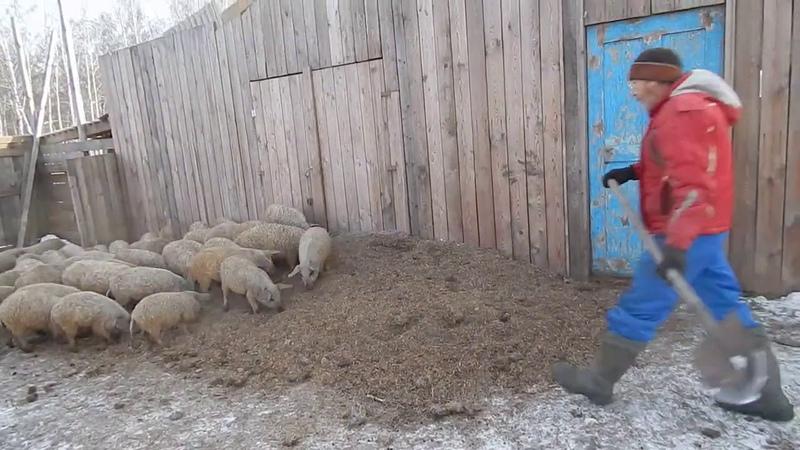 КОРМ ДАРОМ БИО ФЕРМА МАНГАЛИЦА