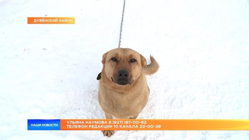 Дом замечательных животных построила для бездомных собак и кошек жительница Саранска