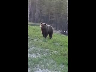 Встреча с медведем в Карелии