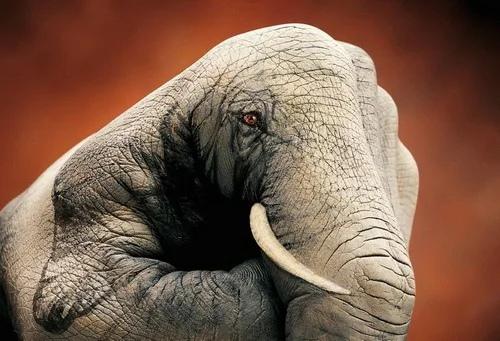 Гвидо Даниэле - иллюстратор, который работает в стиде боди-арта, создает театральные и телевизионные декорации, пишет фрески, иллюстрирует книги Очень известны его необычные рисунки животных на