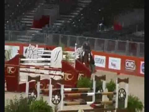 CARRICO by Catoki Holstein stallion