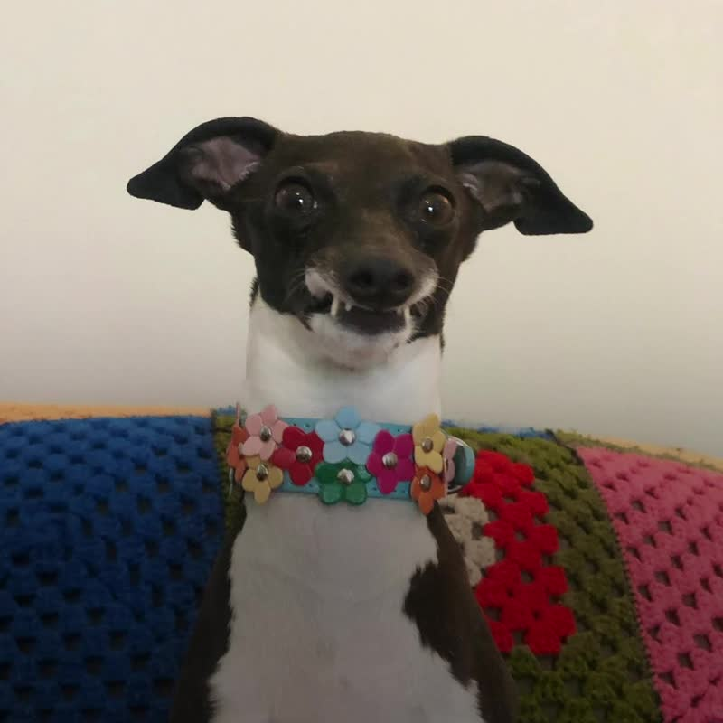 Собака с вампирской улыбкой
