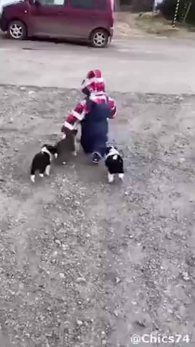 Стая собак напала на ребёнка