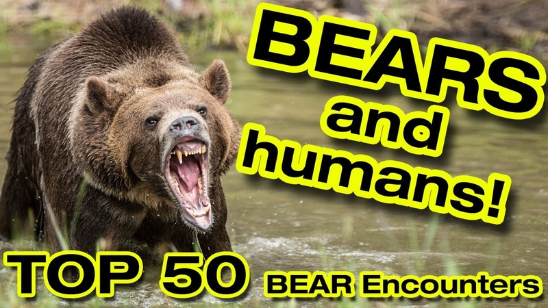 Bear attacks TOP 50 BEAR Encounters Bears fighting Bears and humans Bear hunting