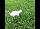 крысятник