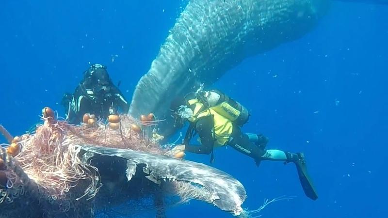 Итальянская береговая охрана вызволила кита из сетей