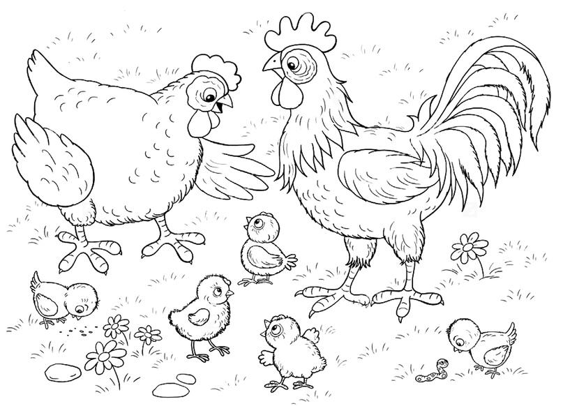 наше птичий двор раскраска для малышей закрытия