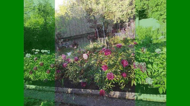 Во саду ли в огороде 1