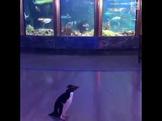 Пингвинам разрешили смотреть на рыбок в океанариуме NR