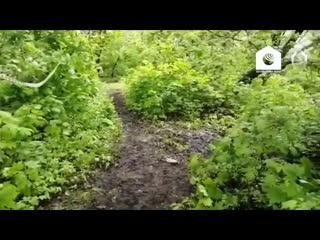 Кадры с места убийства 14-летней девочки в Пензе