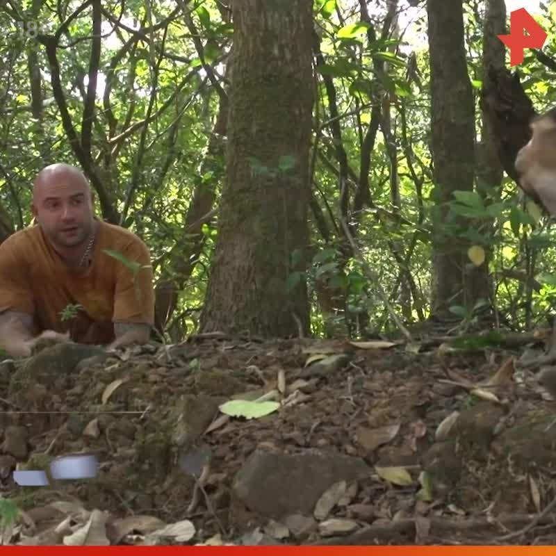 Тимофей Баженов обедает с обезьянами / #РЕНТВ