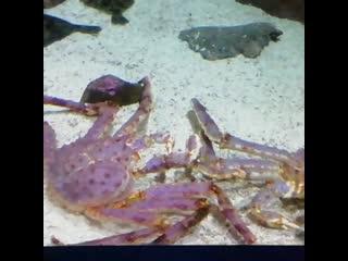 Крабы, океанариум в Питере.