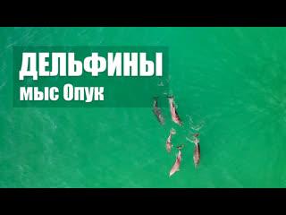 Дельфины у мыса Опук. Крым 2020