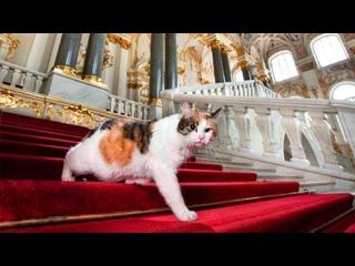 Котики в музеях — это особый вид искусства 🐈 Расск...