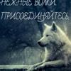 Mihail Tocarev