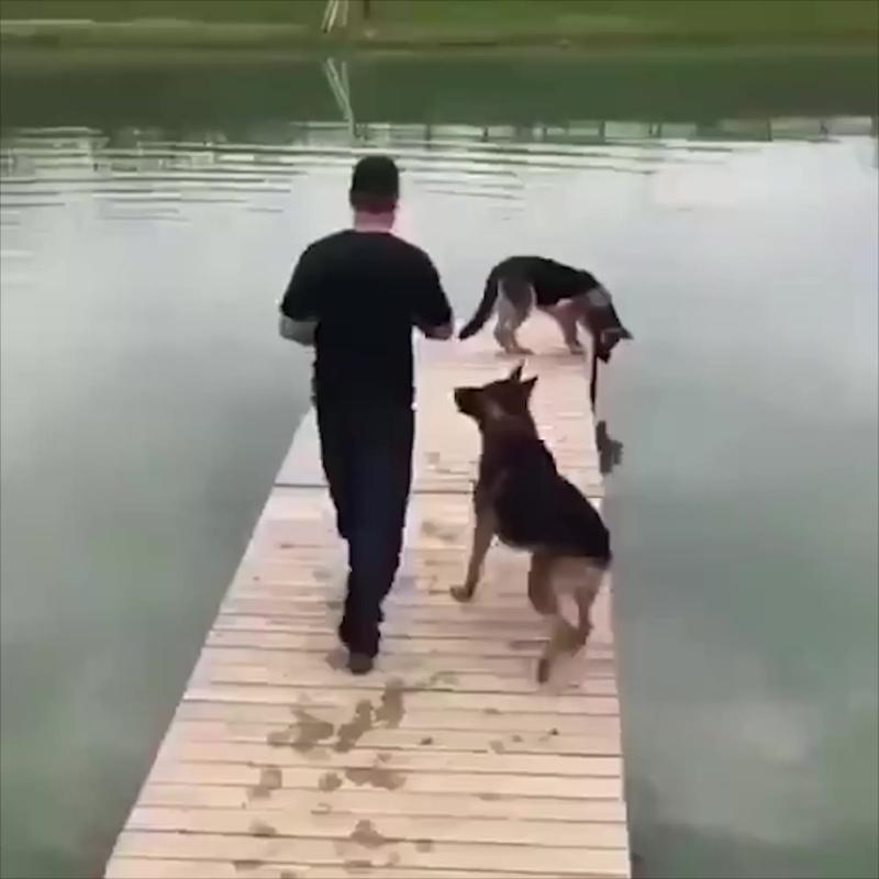 Неловкие собаки падают в воду