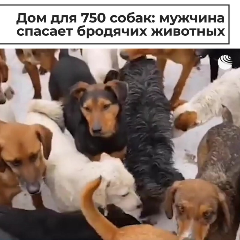 Дом для 750 собак: мужчина спасает бродячих животных
