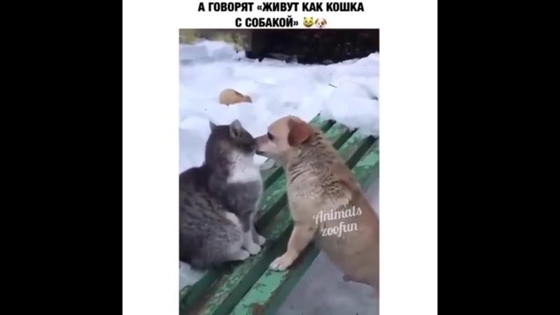 Та ну,кот что-то вкусное съел,вот собакен и обнюхивает его😆