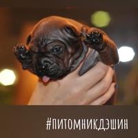 Фотография Ирины Чесноковой ВКонтакте