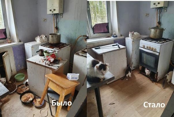 В Самаре спасают несколько десятков кошек, заперты...