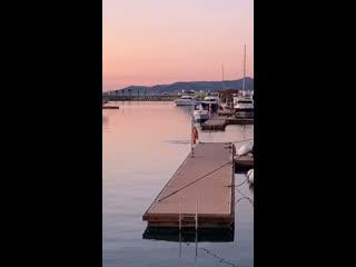 Стая Черноморских дельфинов приплыла на разведку в морской порт Сочи