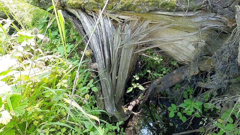 Поиск истока реки Издревая Сбор лекарственных трав День за городом