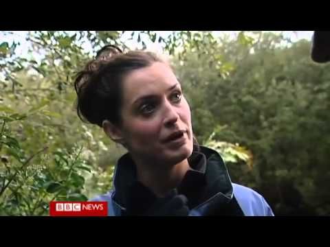 Searching for the Isle of Mans wild wallabies