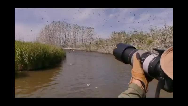 Путешествие в Мертвый лес в колонию больших бакланов дельта Днестра