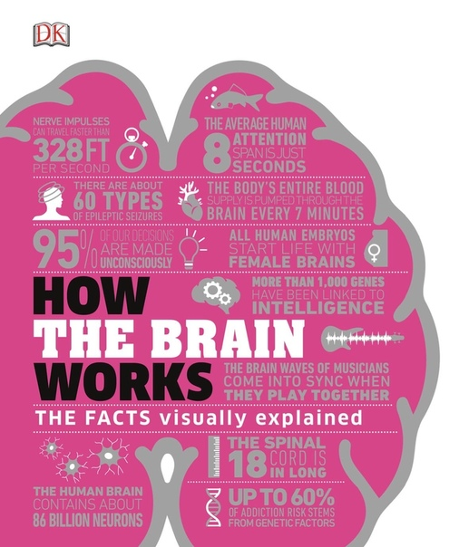 How the Brain Works The Facts Visually Explained by DK