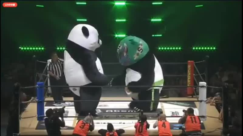Two Giant Panda Bears Have A Wrestling Match