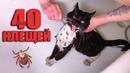 Спасение кота от клещей Котик ищет дом SANI vlog
