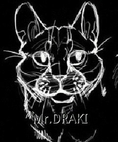Draki Kat