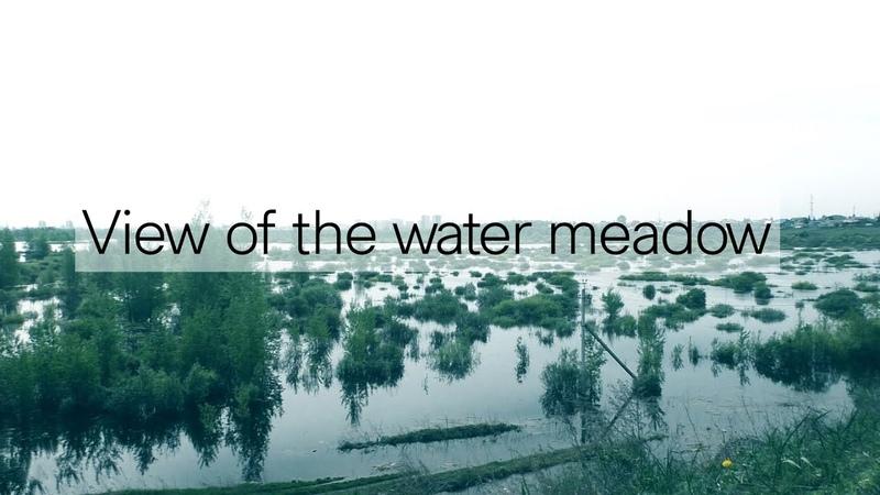 View of the water meadow Вид на заливной луг