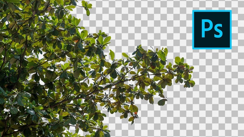 How to Cut Out Twigs and Leaves in Photoshop
